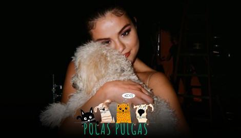 Winnie, el nuevo perro de Selena Gómez, debutó en Instagram